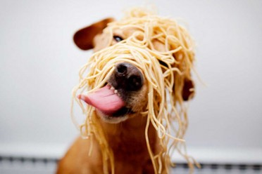 cute-dog-food-funny-pasta-tongue-Favim.com-43335