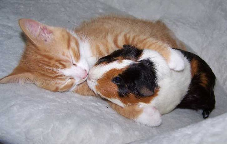 unlikely-sleeping-buddies-animal-friendship-221__605