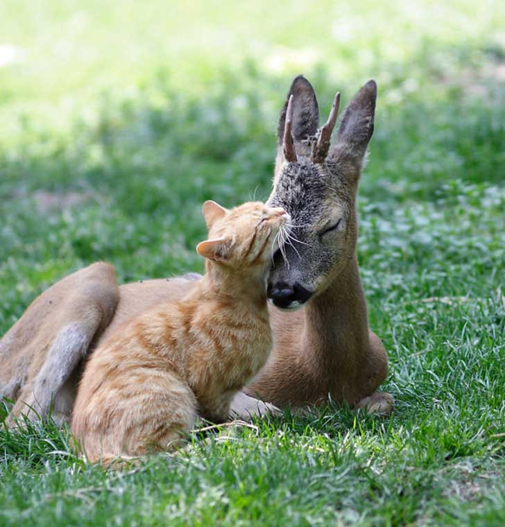 unlikely-sleeping-buddies-animal-friendship-271__605