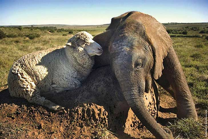 unlikely-sleeping-buddies-animal-friendship-321__605