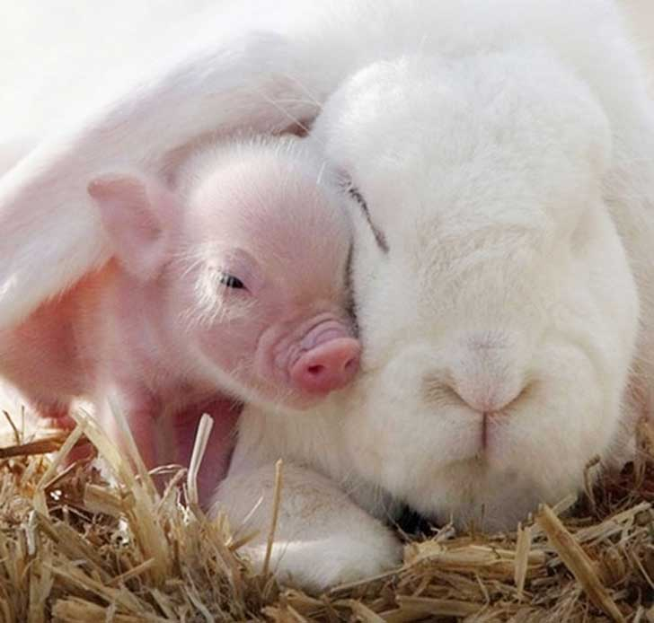unlikely-sleeping-buddies-animal-friendship-351__605