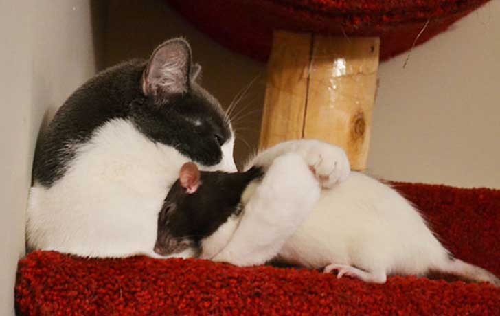 unlikely-sleeping-buddies-animal-friendship-421__605