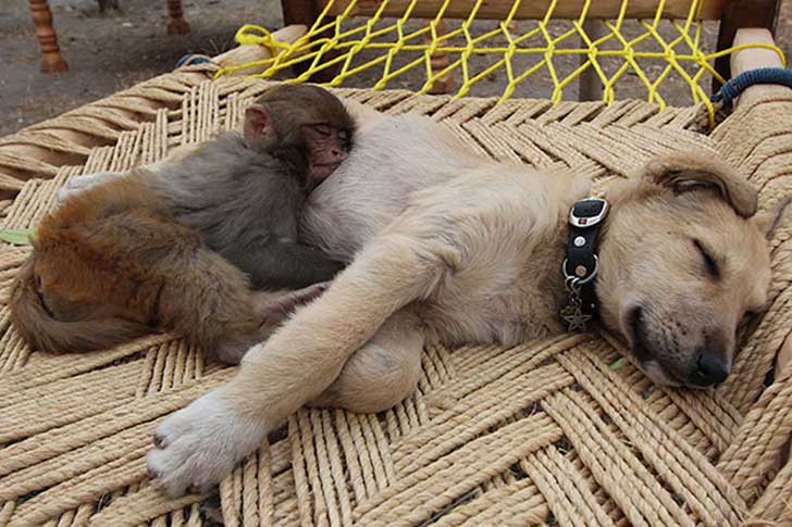 unlikely-sleeping-buddies-animal-friendship-511__605
