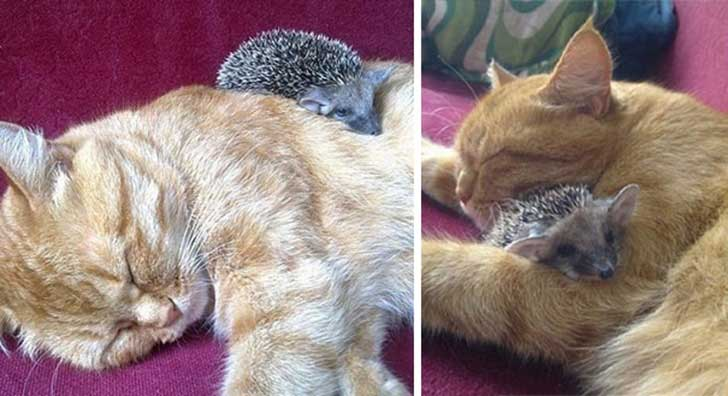 unlikely-sleeping-buddies-animal-friendship-54__605
