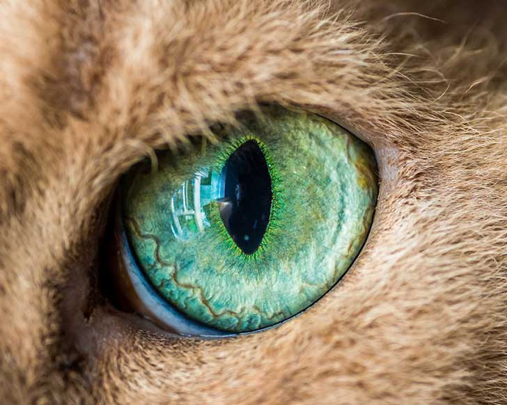 I-Take-Hypnotizing-Macro-Shots-Of-Cats-Eyes-Up-Close__880