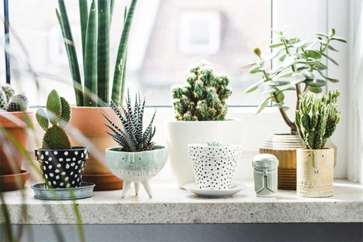 plants-home-decor-7