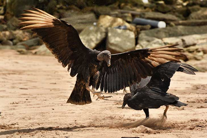 i-stood-next-to-these-amazing-birds-of-prey-and-photographed-them-to-tell-their-story-10__880
