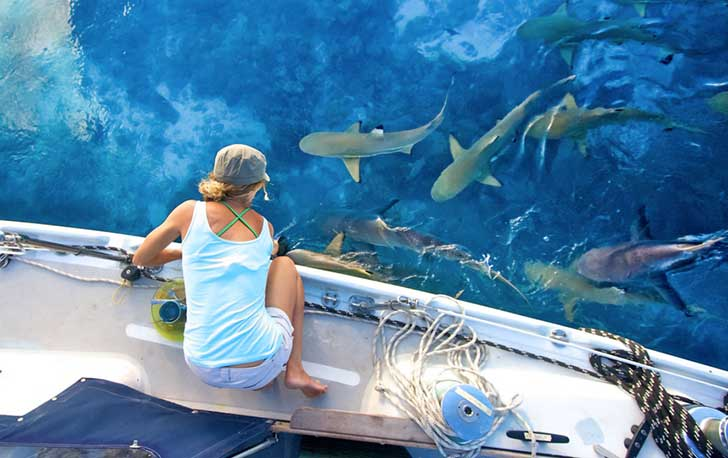 liz-clark-feeding-sharks