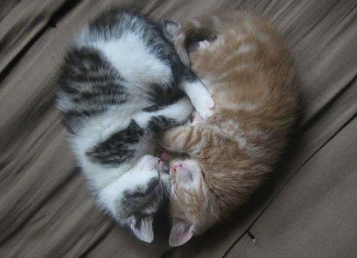 cat-couples-valentines-day-15__605