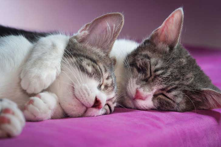 cat-couples-valentines-day-27__605