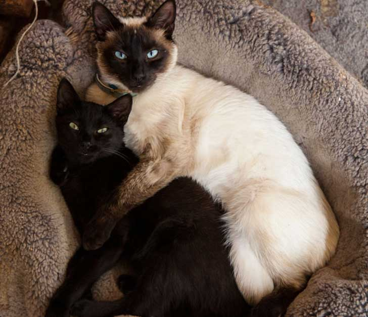 cat-couples-valentines-day-29__605