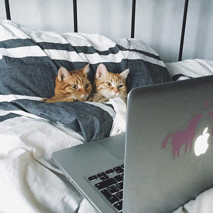 cat-couples-valentines-day-361__605