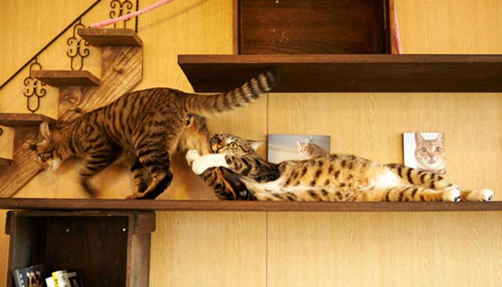 cat-couples-valentines-day-9__605