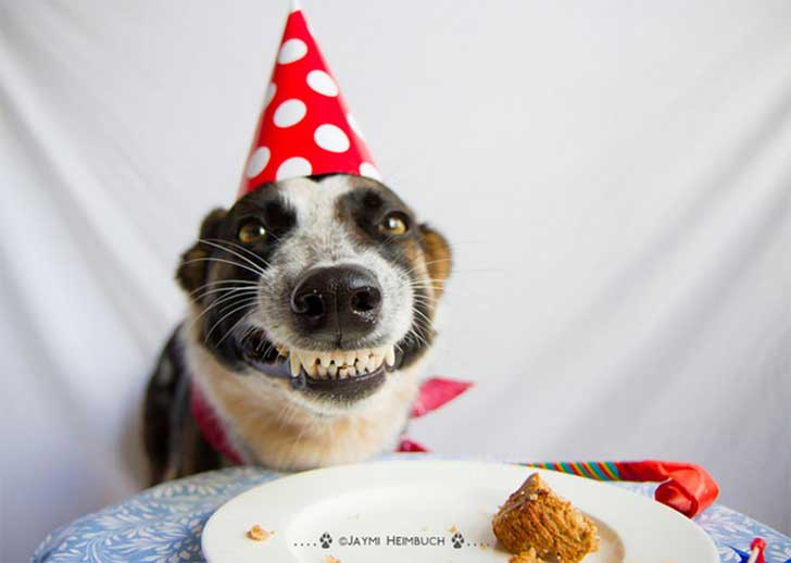 Pets-That-Have-Better-Birthday-Parties-Than-You-5706ba3496d6a__700