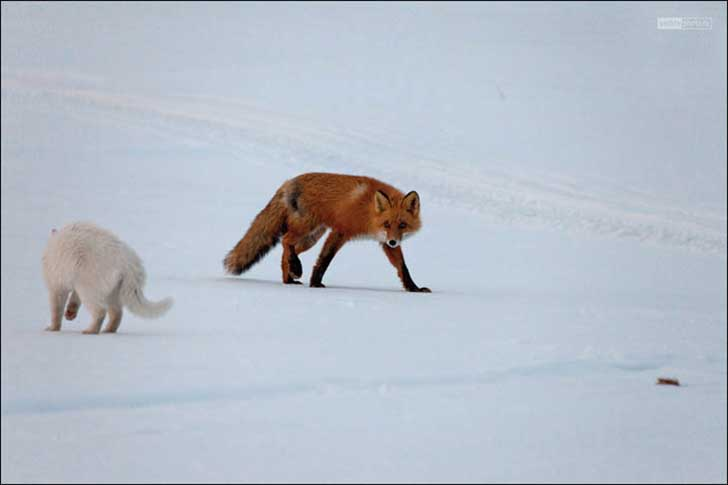 inside-cat-and-fox-look-at-each-other