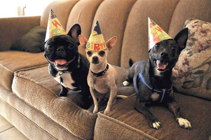 pets-that-have-better-birthday-parties-than-you-46-570e084252af3__700