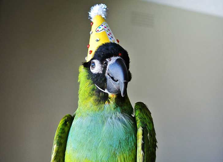 pets-that-have-better-birthday-parties-than-you-51-570e16cebad3c__700