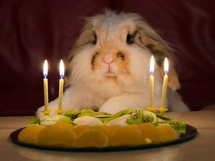 pets-that-have-better-birthday-parties-than-you-66-570f38408cd3a__700