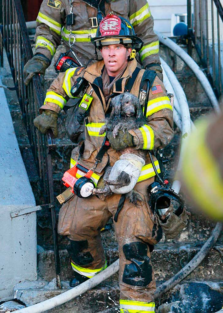 firefighters-rescuing-animals-saving-pets-2-5729a8f8e86f9__605