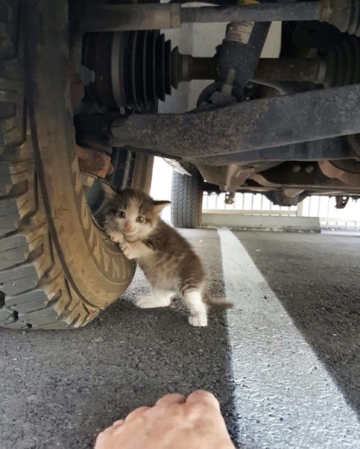 stray-kitten-found-under-truck-adopted-cat-axel-4