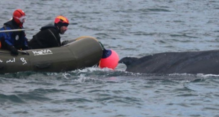 why-on-earth-would-4-men-on-an-inflatable-raft-try-to-rodeo-a-humpback-whale-to-save-it_1