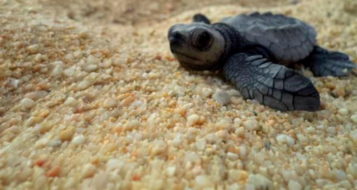 Hero-Shot-baby-sea-turtle-release-Mexico1