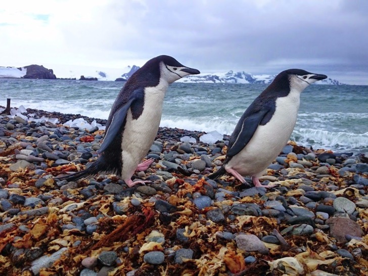 according-to-garfors-penguins-in-their-real-environment-are-a-must-see-they-are-incredible-swimmers-and-posers