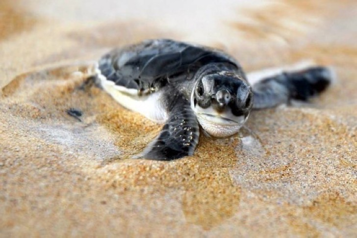 baby-turtle-in-tulum-mexican-caribbean