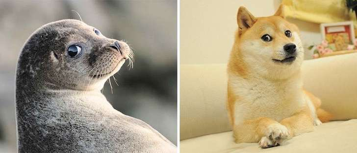 funny-seals-look-like-dogs-108-574d82b7336cc__880 2