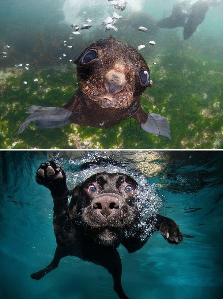 funny-seals-look-like-dogs-15-574d85cedf0a7__880 2