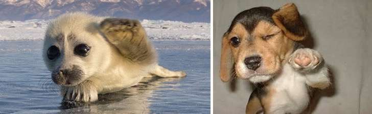 funny-seals-look-like-dogs-17-574d97c87c87d__880 2