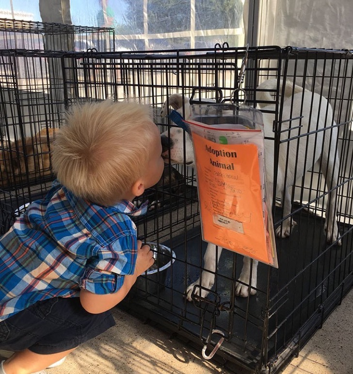 animals-adopted-45000-clear-the-shelters-24