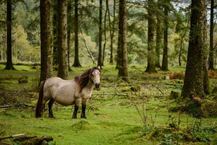 feral-dartmoor-pony.jpg.638x0_q80_crop-smart