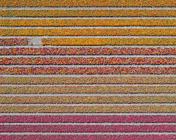 tulip-fields-aerial-photography-netherlands-bernhard-lang-577274ee960cf__700