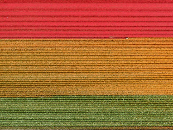 tulip-fields-aerial-photography-netherlands-bernhard-lang-5772774594c35__700