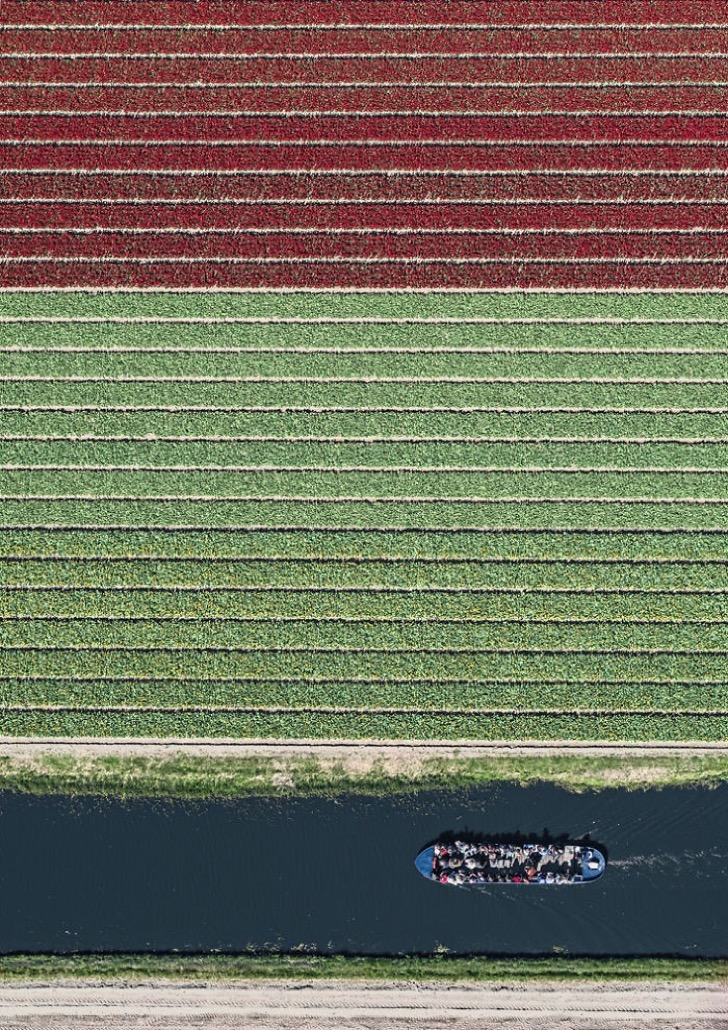 tulip-fields-aerial-photography-netherlands-bernhard-lang-5773d99b16610__700