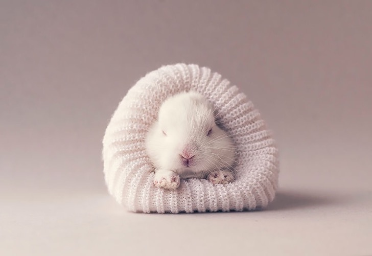 I-did-a-newborn-photo-shoot-with-my-baby-bunny-57a282275bac1__880