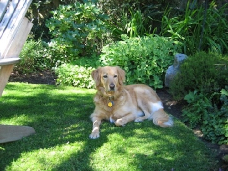 alfie-At-Home-in-His-Garden-600x450
