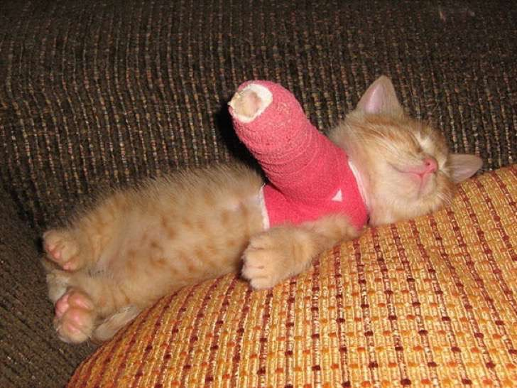 animals-in-tiny-casts-2-5800938e28fb0__605-2
