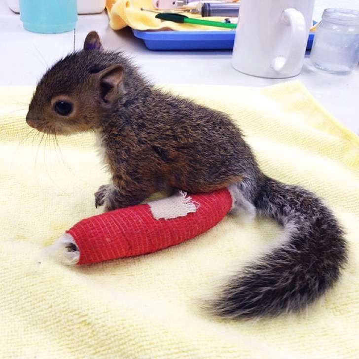 animals-in-tiny-casts-5-580093968a038__605-2