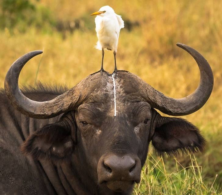 comedy-wildlife-photography-awards-shortlist-2016-18-57fb40b7bed8d__880-2