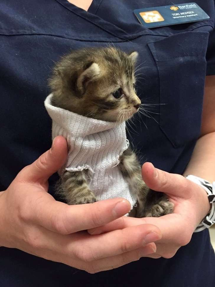 kitten-tube-sock-sweater-hurricane-matthew-1-2