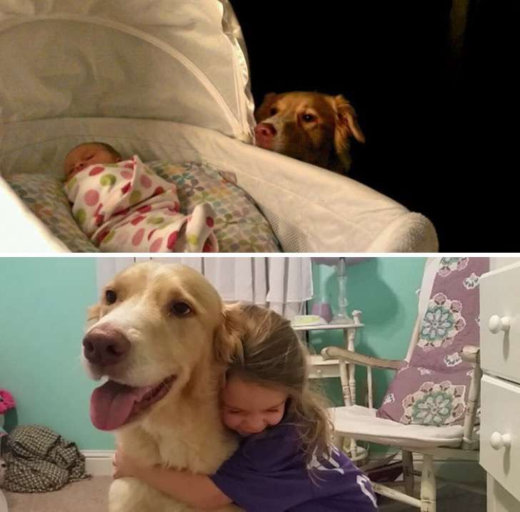 before-after-dogs-growing-up-together-with-owners-100-5825c65200257__700-2