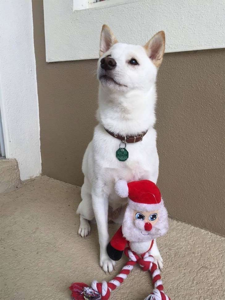 dog-toy-santa-mall-picture-kya-13-2-2