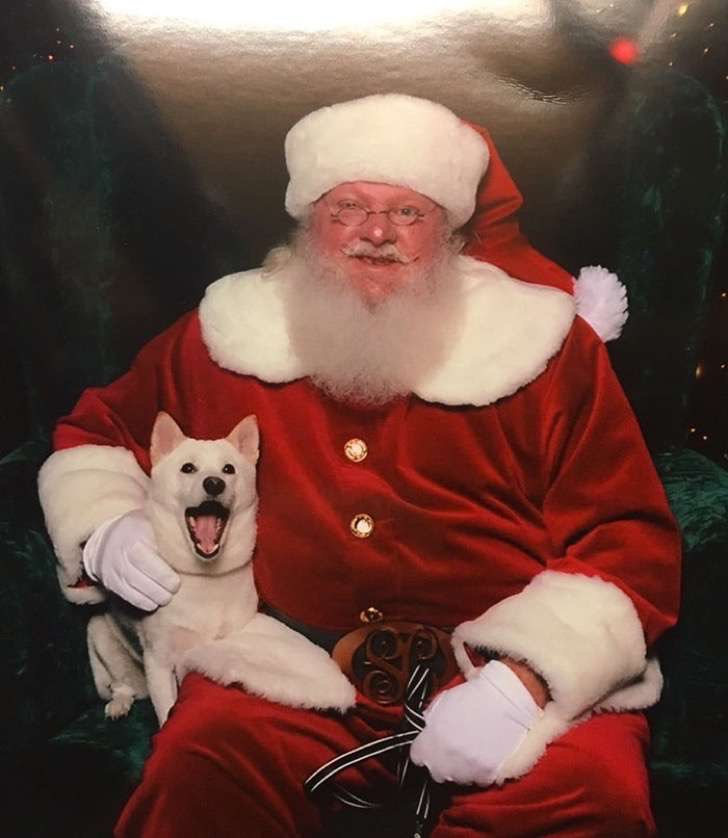 dog-toy-santa-mall-picture-kya-5-2