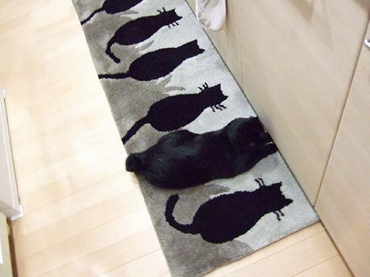 find-hidden-cat-camouflage-hide-and-seek-catouflage-114-58369cbb26709__605