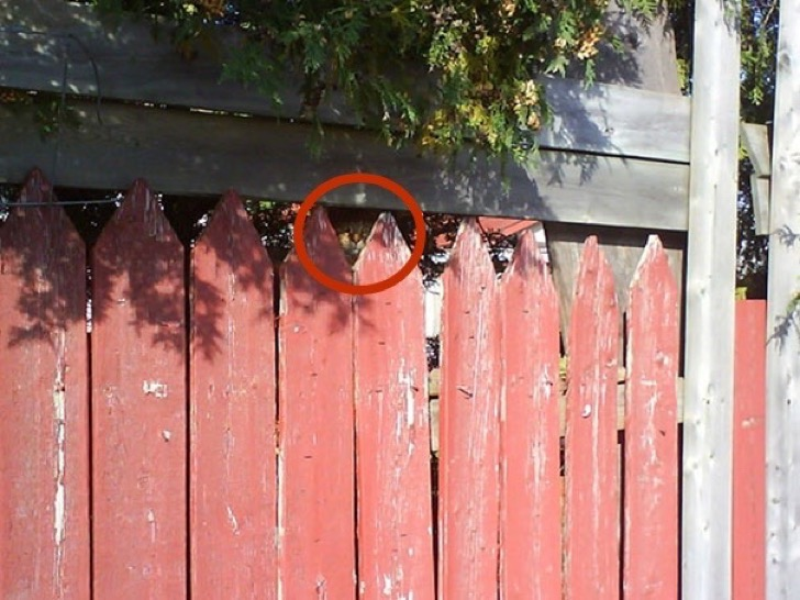 find-hidden-cat-camouflage-hide-and-seek-catouflage-172-copia
