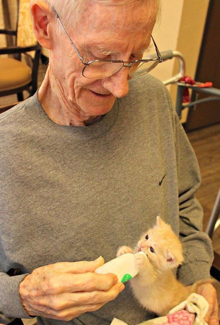 retirement-home-shelter-cats-2-2