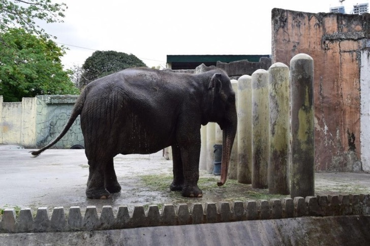 mali of manila zoo ir Manila, philippines --- the city council of manila has approved a resolution citing the conditions for the city's lone elephant to temporarily stay at the subic animal theme park as the manila zoo undergoes modernization earlier, the management of the zoobic safari in subic, zambales, volunteered .
