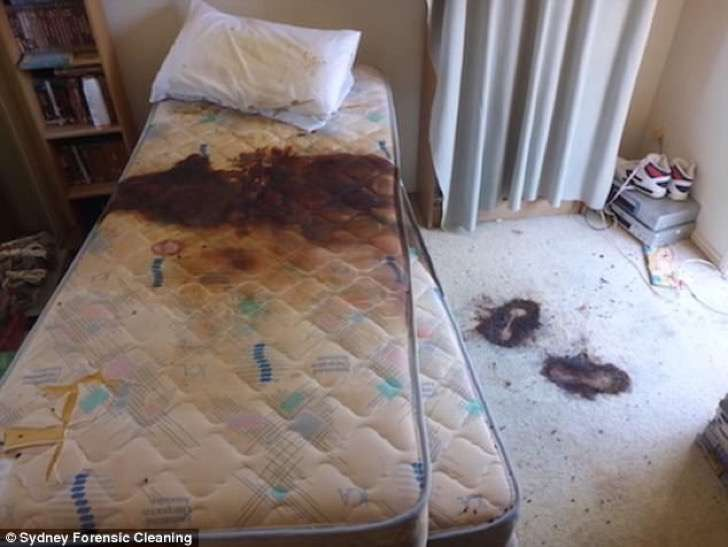 Cat Pee On Bed Sheets